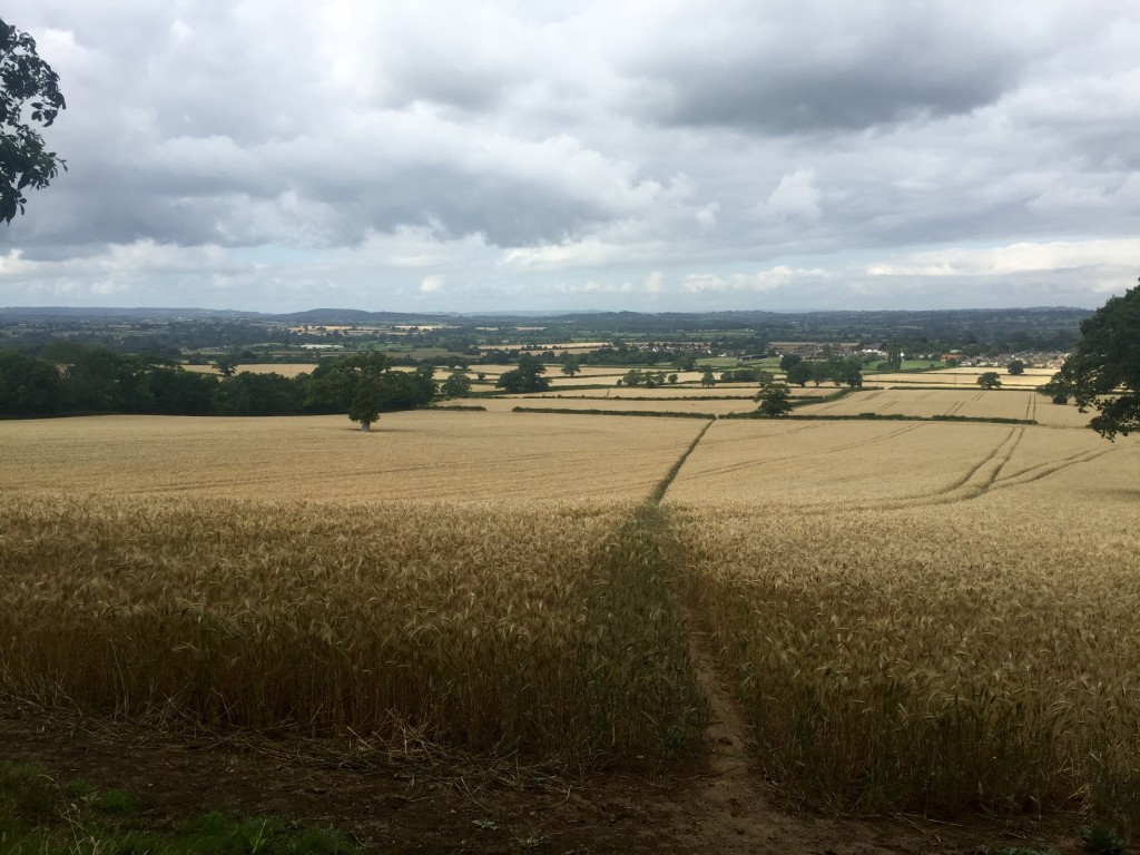 A trail run around Sherborne, Thornford and Lillington, Dorset