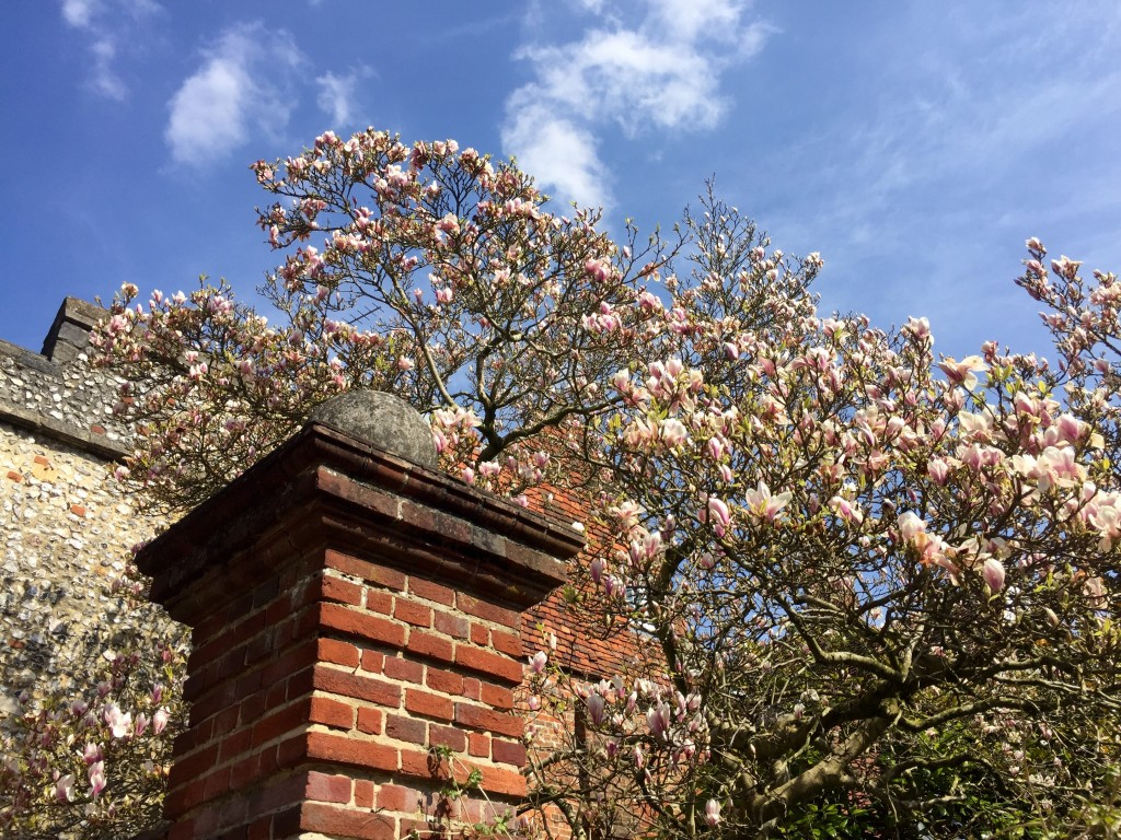 Cherry-Blossom-City-Walls-Winchester