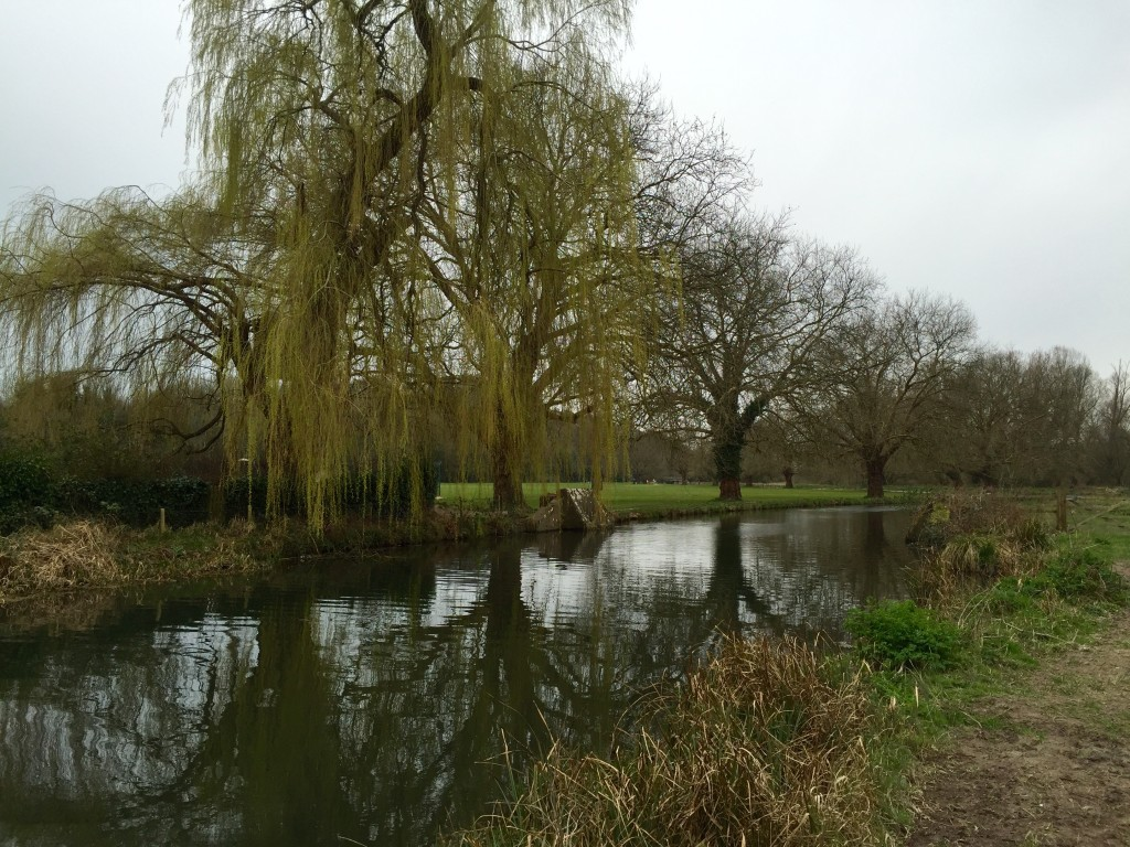 Weeping-Willow-Itchen-Bavigation-Winchester