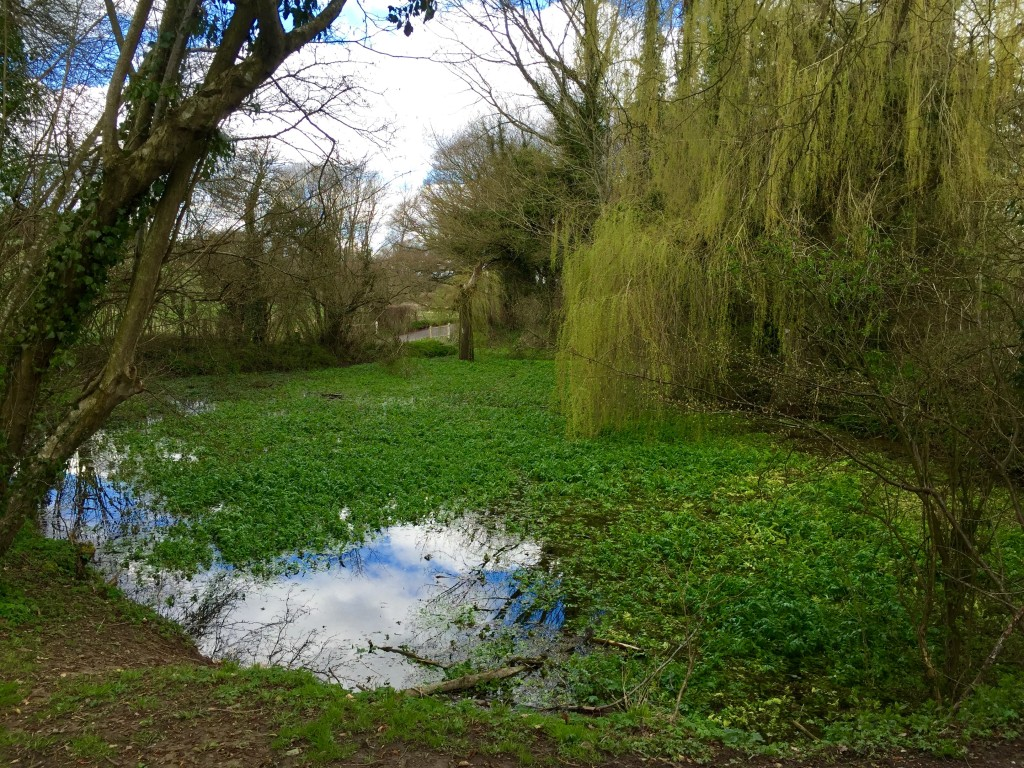 The source of the Itchen at Cheriton