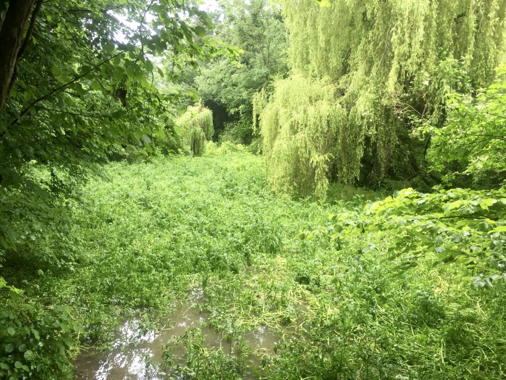 Source of the Itchen
