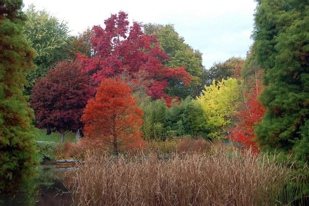 Where to see the autumn colours in Hampshire