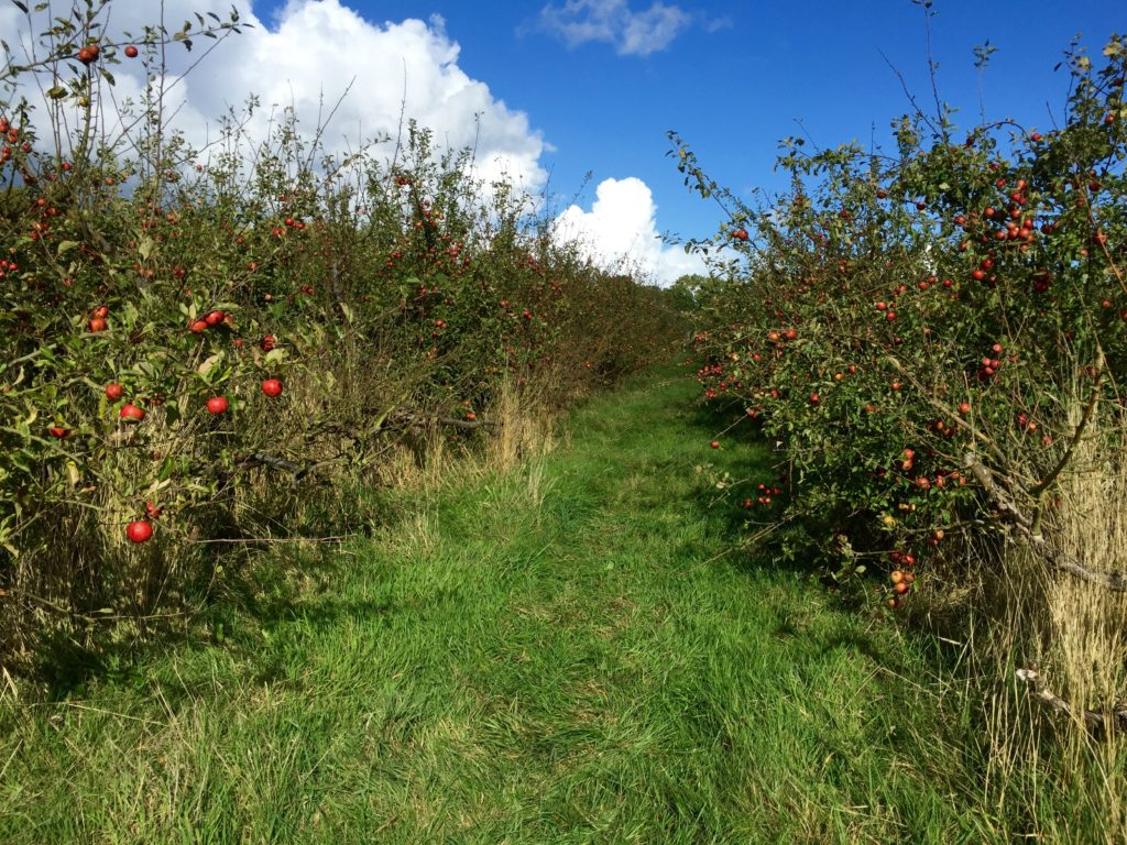 hill-farm-orchards-3