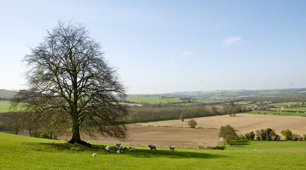View from Old Winchester Hill